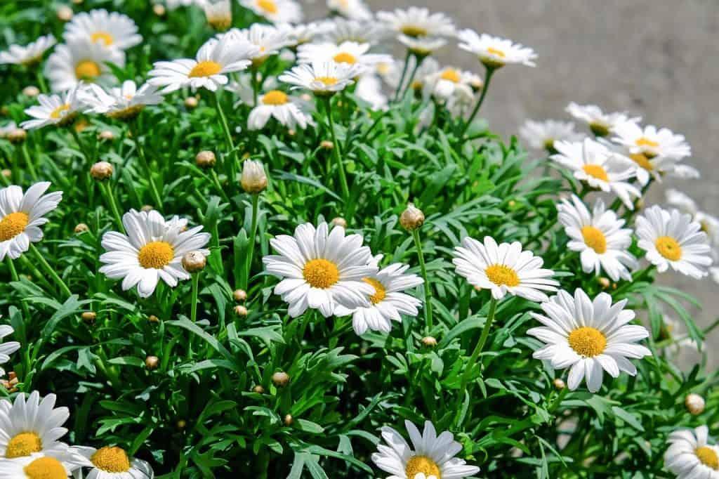 פרחים מדומים